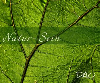 DAO Natur Sein – Stille und die Kunst der Präsenz