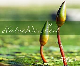 DAO Natur Walk – Lebensthemen mit Naturkraft klären
