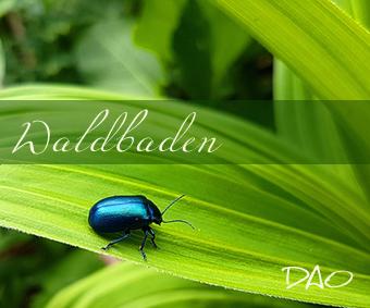 DAO Stressabbau & Entspannung – Waldbaden