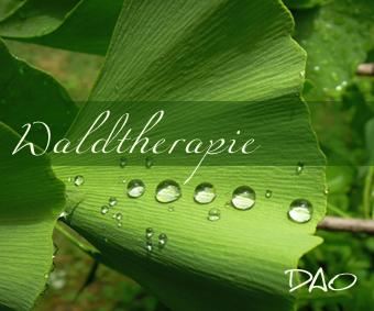 DAO Heilkunst – Heilen mit der Natur – Waldtherapie
