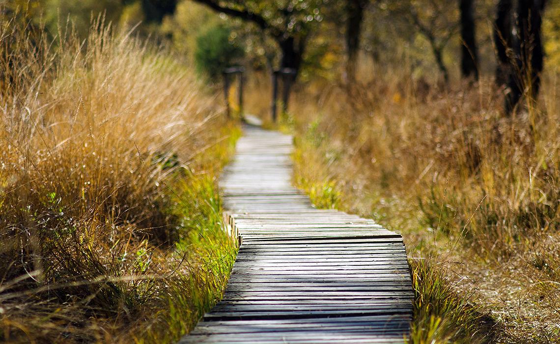 inneres-gleichgewicht-entspannung-natur-2