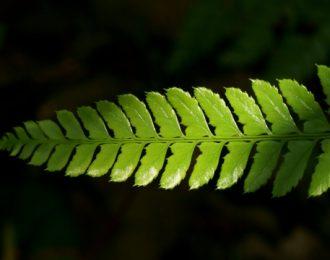 therapieangebot-von-dao-natural