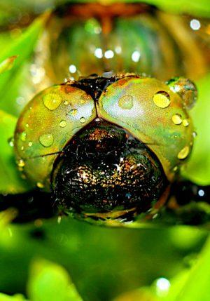 Insekt Makro Wohnraumklärung Goldbeck